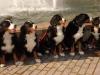 20111015-hunde-mit-letzacher-hintergrund