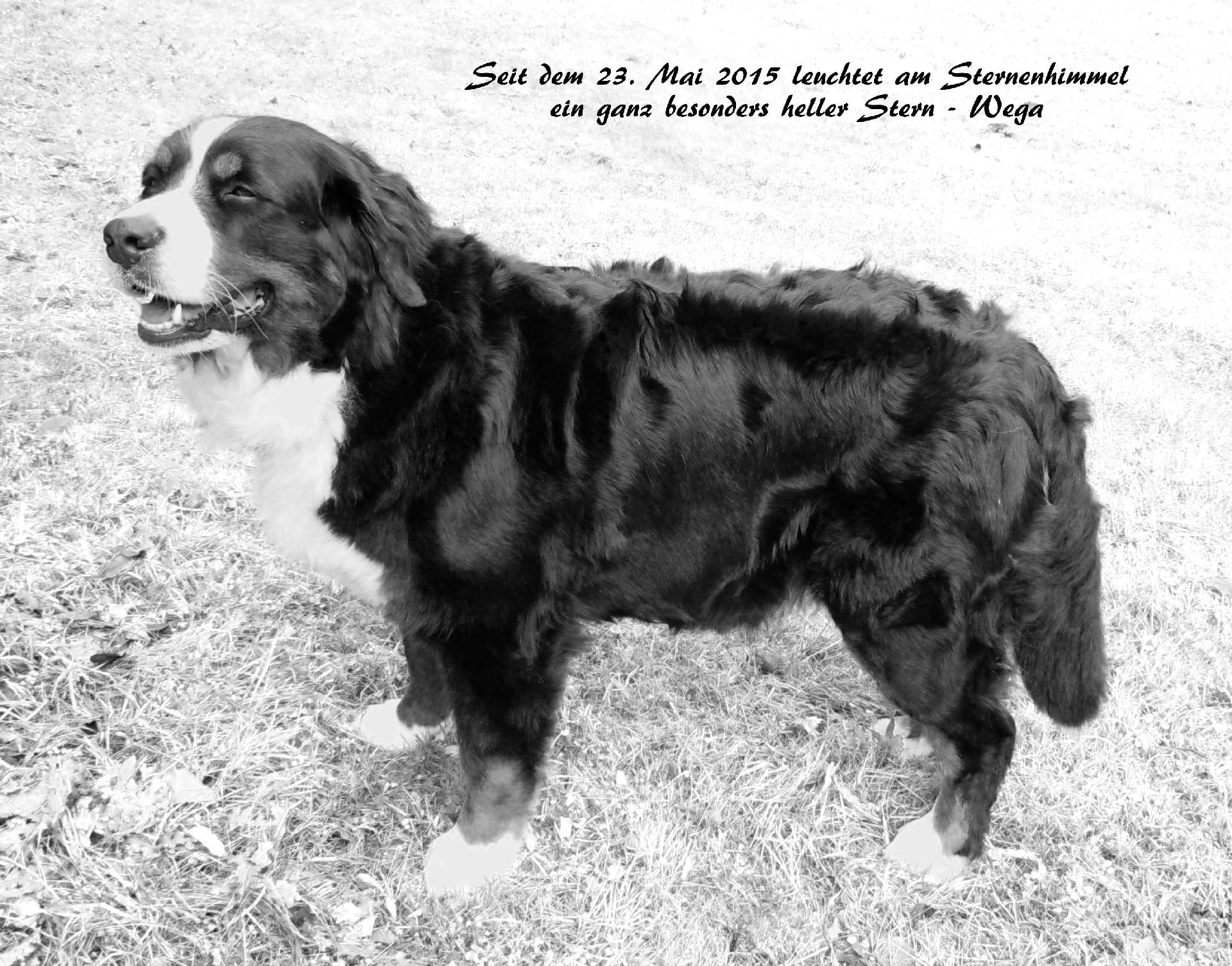 Wega vom Letzacher - 22.04.2006 - 23.05.2015