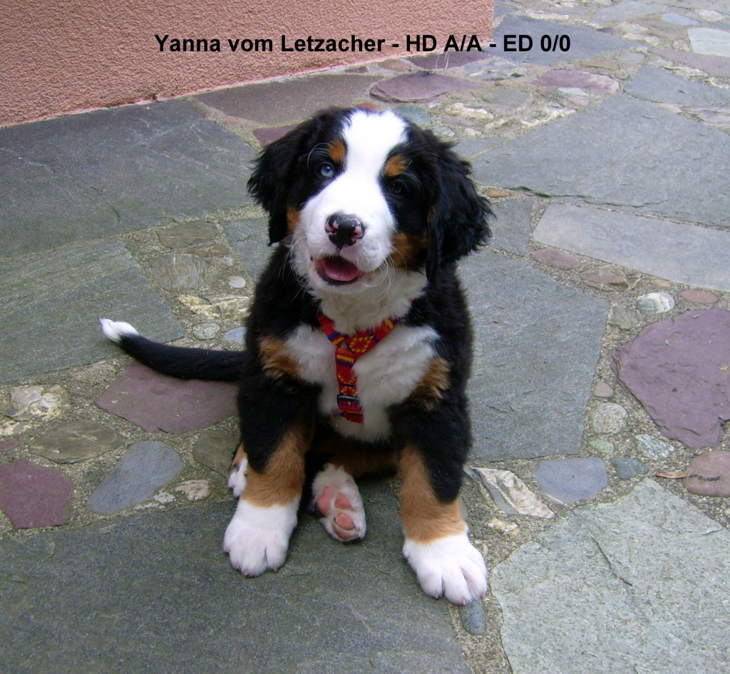 20080625 Unsere Hunde + Y-Wurf 035